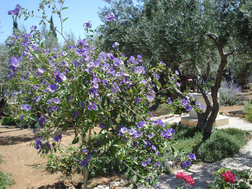 19 Gethsemane